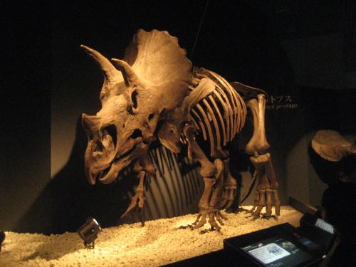 恐竜博20110707-6