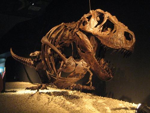 恐竜博20110707-7