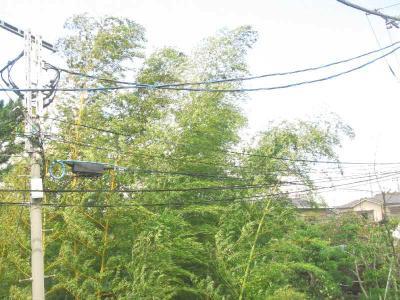 ★家の前の木が・・・★
