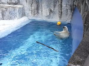 プールでスイスイ~♪