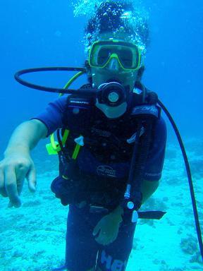 ダイビング ダイビング