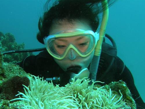 エニヤ体験ダイビング