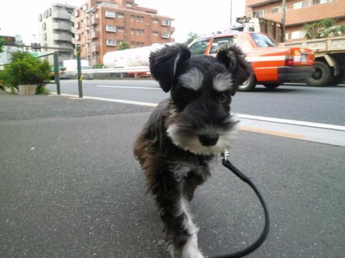 散歩は怖くない。