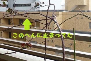 P1060953l.jpg