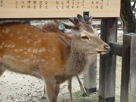 広島修学旅行140