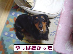 20090725-5.jpg