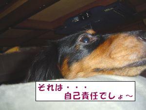 20090801-5.jpg