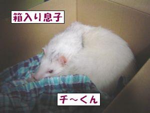 20090831-3.jpg