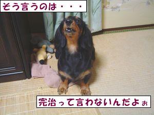 20090902-4.jpg