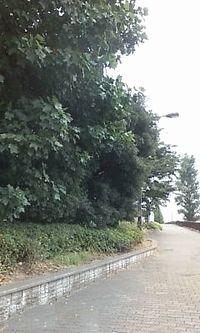 20090911-3.jpg