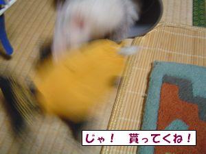 20090913-4.jpg