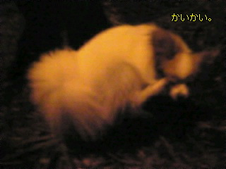 20090810195641