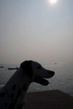 ダルメシアン アル 20091101 海
