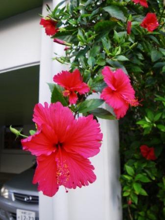 沖縄2009 026