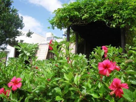 沖縄2009 064