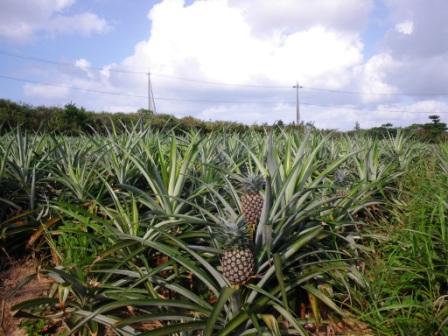 沖縄2009 070