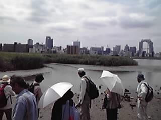 淀川フィールドワーク