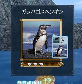 080309 054732ガラパゴスペンギン