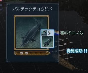 092009 051453バルチックチョウザメ