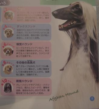 犬のしつけBOOK.GE