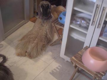 ワンワン栗ご飯3-2009