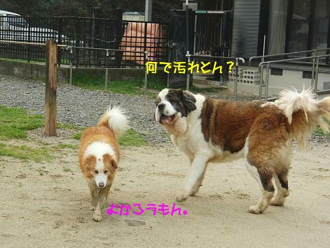 CIMG0778_20110331101338.jpg
