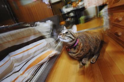猫でスローシンクロ!