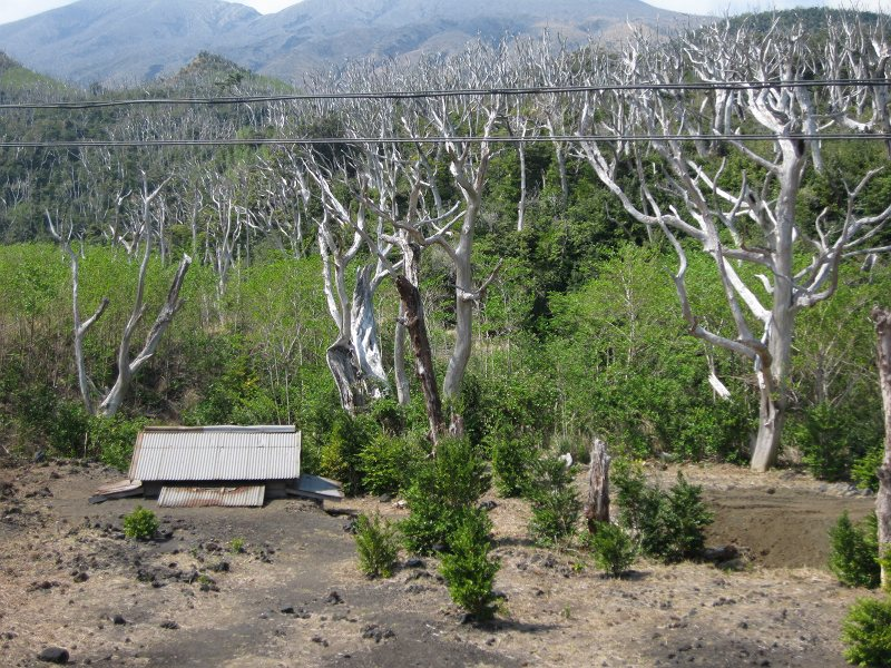 枯れた木と埋もれた神社