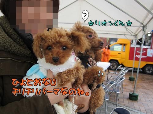 いぬきち10