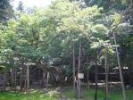伊佐須美神社5