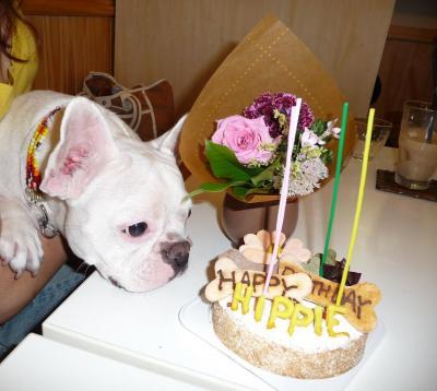 ケーキのヒッピー