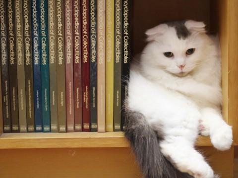 CAT_20120315