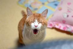 CAT_20110622