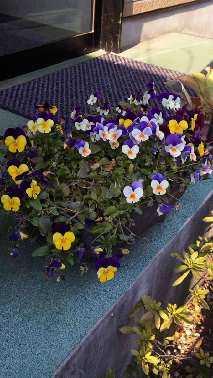 Flowers_20110331