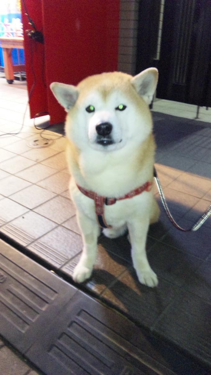 小太郎君_20110331