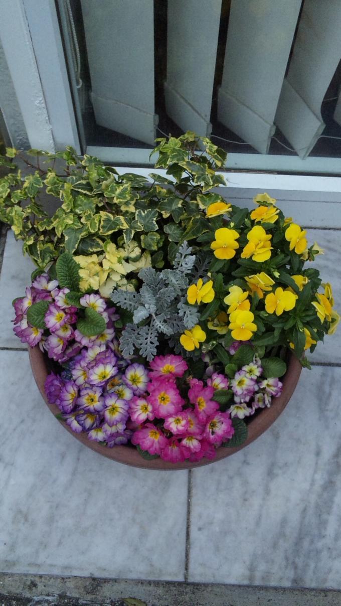 Flowers_20110401