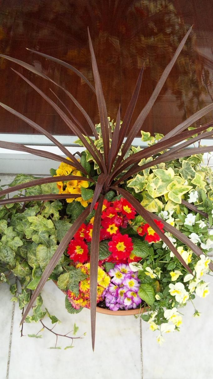 Flowers_20110402