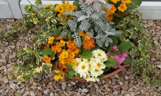 Flowers_20110403