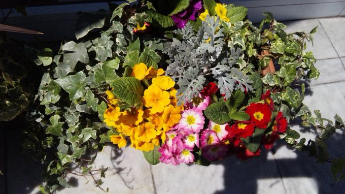 Flowers_20110404