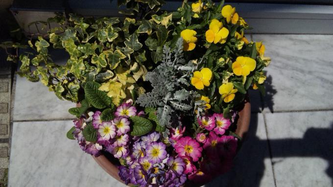 Flowers_20110406