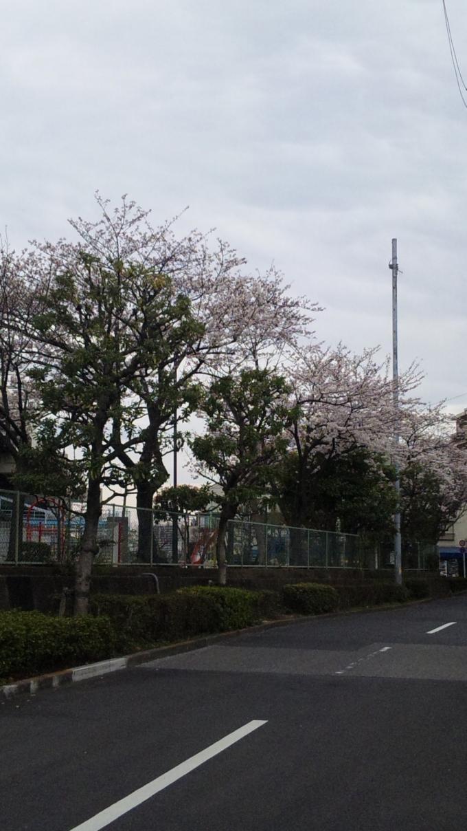 SAKURA_20110408
