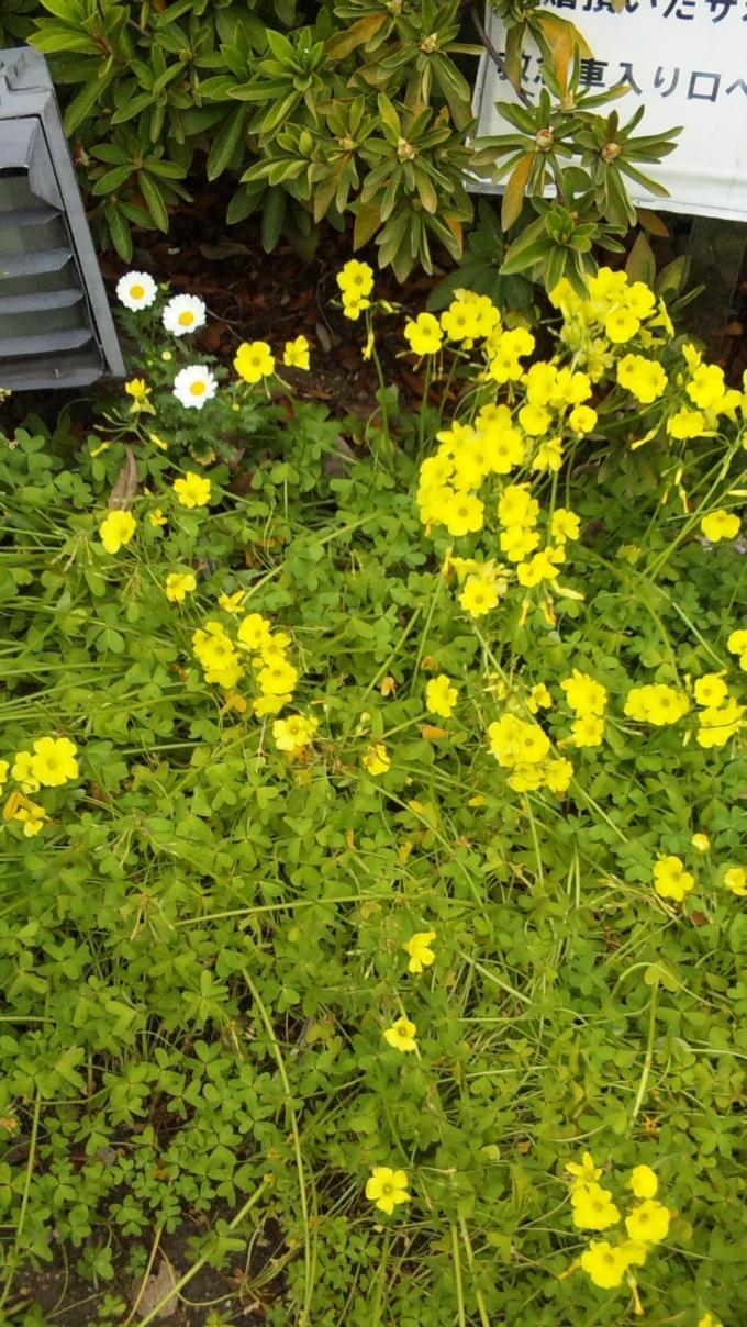 Flowers_20110408