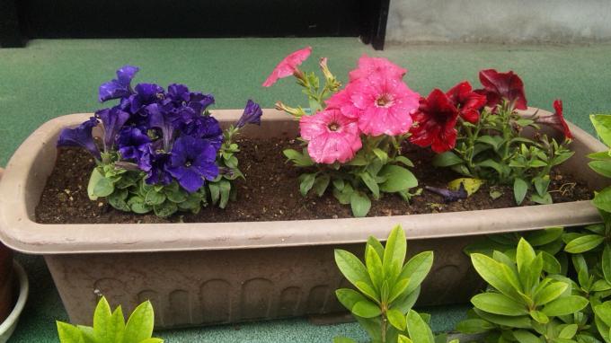 Flowers_20110411
