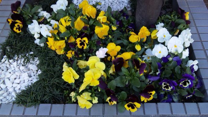 Flowers_20110412