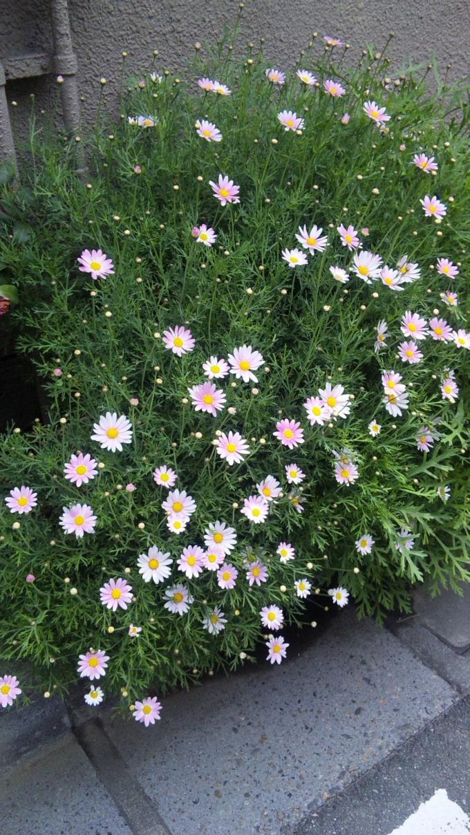 Flowers_20110422