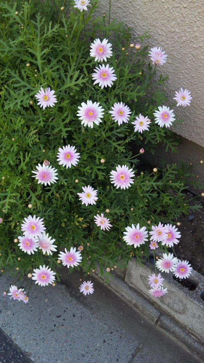 Flowers_20110427