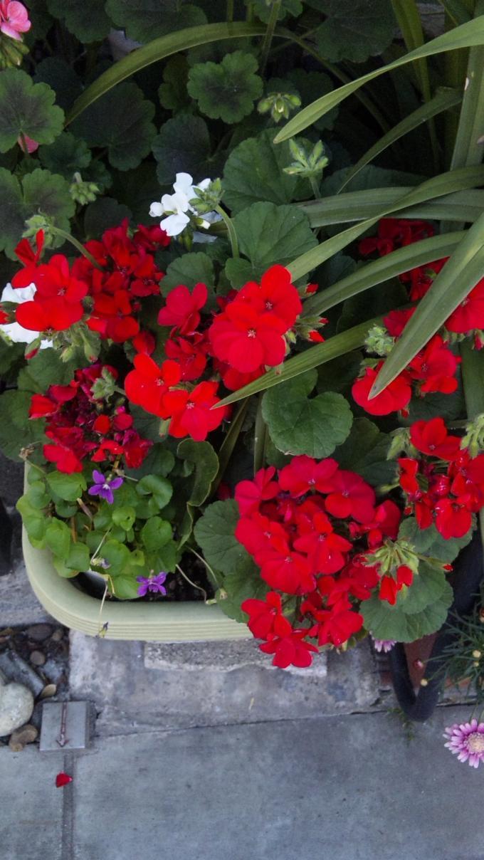 Flowers_20110428