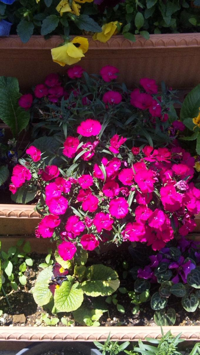 Flowers_20110429