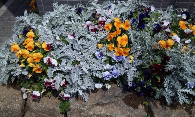 Flowers_20110430