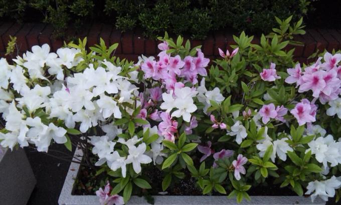 Flowers_20110502